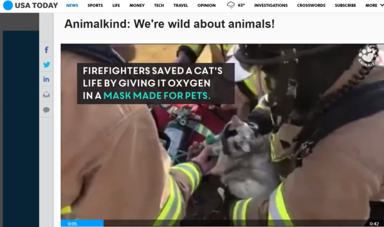 Photo of firefighters saving a cat by giving it oxygen in a mask made for pets.