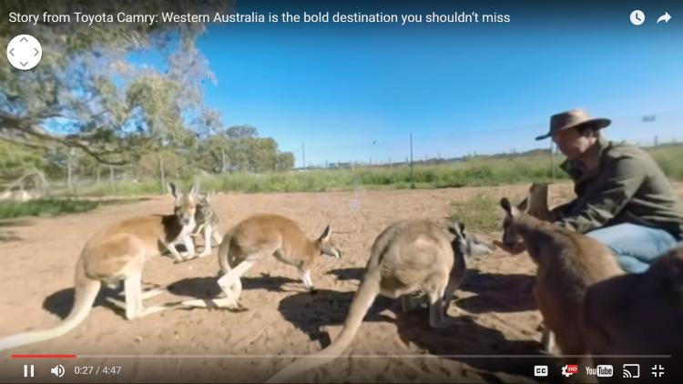 Image of kangaroos and a man